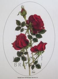 Red Roses - Linda P